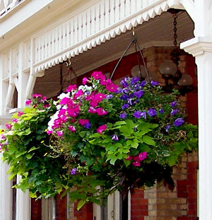 flower-flowers-hanging-basket-floral