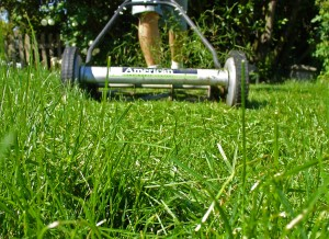 lawn-care-maintained-lawn-mower-mowing-grass